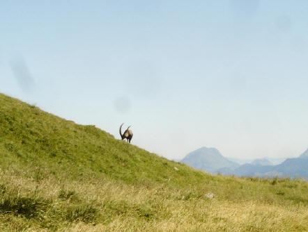 BS4: A la découverte de la Haute Savoie (La Hiaute 1) 060_60
